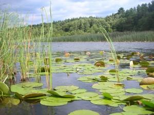 lake-261816_640